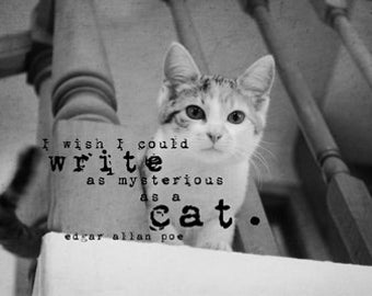 Kitten print Cat quote Feline art Edgar allan poe words I wish I could write as mysterious as a cat Black white pet photography decor design