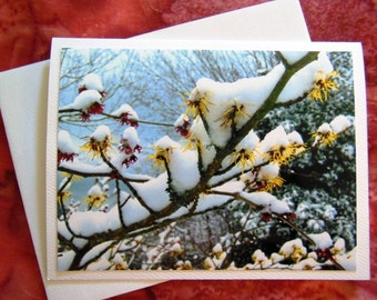Witch Hazels in the Snow - Card - Blank Inside