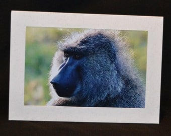 Original Photography Note Card - Baboon 2