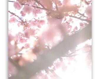 Floral Photography, dreamy pastel decor, pink nursery wall art, flowers, pale blossoms, feminine decor - Fine Art Photograph