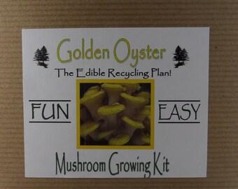 Golden Oyster Mushroom Growing Tissue Kit Project