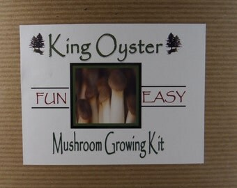 King Oyster Mushroom Growing Tissue Kit Project