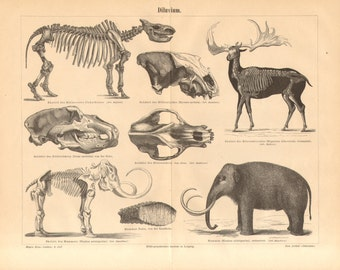 1890 Pleistocene Megafauna, Ice Age Mammals, Woolly Rhinoceros, Irish Elk, Cave Bear, Woolly Mammoth, Cave Hyena Antique Engraving