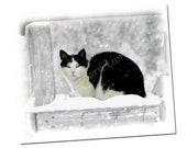 Cat In Snowflakes, Tuxedo Cat Note Card, Winter
