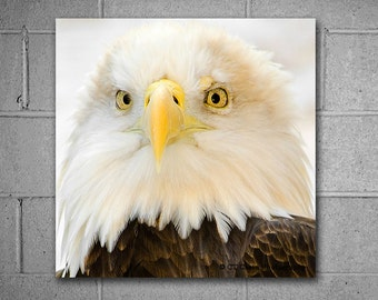Bald Eagle Metal Wall Art, Perfect for an office or man cave, Photography by CT Costa, Ready to Hang Art