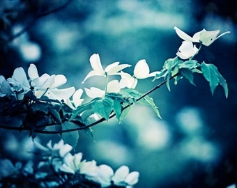 "Dark Blue Flower Photography - navy white floral print nature wall art large photograph branches picture branch, ""Dogwood by Moonlight"""