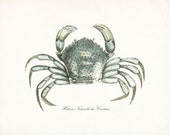Antique French Crab Natural History Giclee Art Print