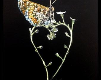 Butterfly Love - Scratchboard Print, heart plant, colorful wings