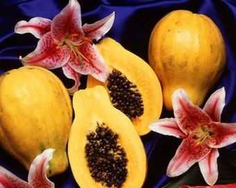 5 Dwarf Papaya Seeds-1059