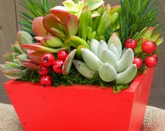 Succulent Centerpiece, Succulent Holiday Centerpiece, Red Wooden Boxed Succulents, Succulent Christmas Tabletop, Christmas Gift