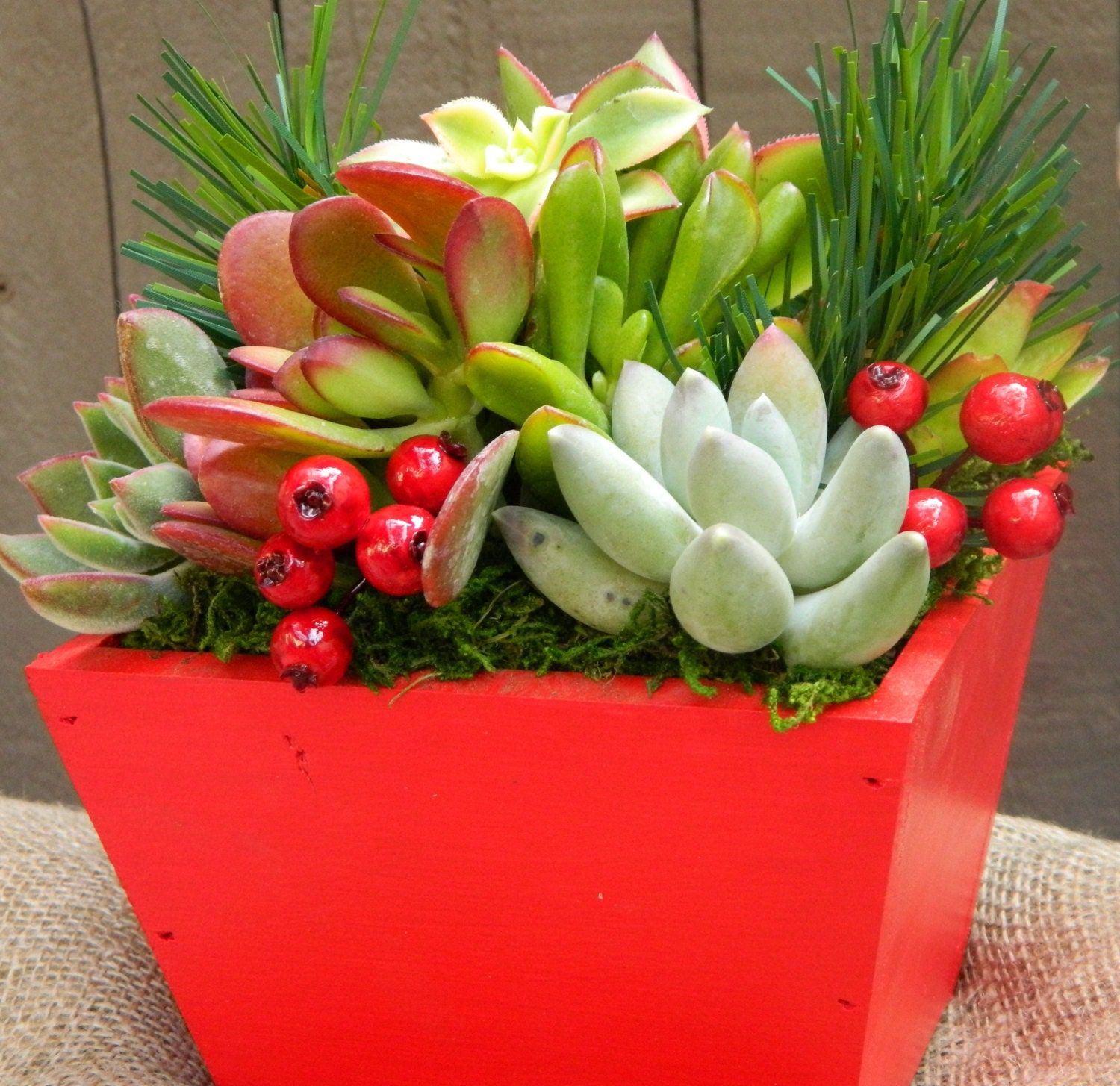 Succulent Centerpiece Succulent Holiday Centerpiece Red