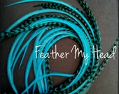"""Super Long 11""""-14""""  Feather Hair Extension, Whiting Eurohackle, Turquoise, 6 Piece (3 Grizzly / 3 Solid)"""