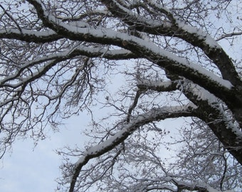 Snowy Branches Digital Download Nature Photography