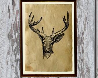 Deer illustration antlers art animal print Old paper home decor AK280