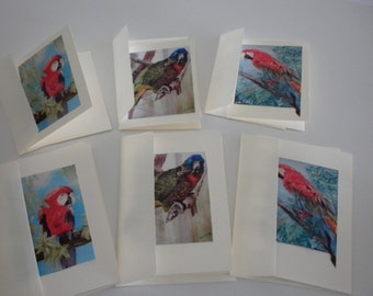 Tropical Birds Note Card Set   Original Art Photos Parrot Macaw