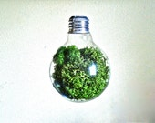 Light Bulb Green Preserved Reindeer Moss Decoration, Green Preserved Lichen Terrarium Hanging Light Bulb Terrarium, Glass Terrarium Ornament
