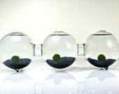 Marimo Moss Ball Three Globe Aquarium // Three Connected Bio Globe,Three Glass Orb Terrarium, Glass Orb Decor, Glass Globe Home Decor