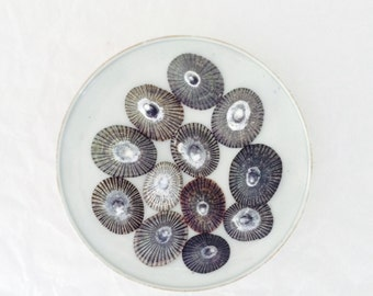 Opihi Shells - limpet shells - 12 shells - Hawaii - hand picked - DIY shell jewelry supplies - all natural - surf tumbled - craft supplies