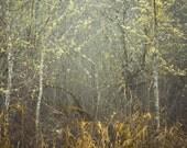 Northwest Moss,  8 x 10 Photography Art Print