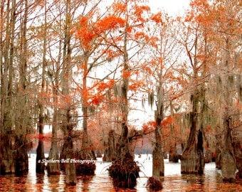 Tree Photo Swamp Photograph Print Water Photography Red Moss 8x10 Trees Fall Trees Swamp Lake Photo Water Red Tree Louisiana Bayous 5