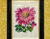 PINK MUM CHRYSANTHEMUM Dictionary Book Page Art Print Recycled Vintage Book Page Upcycled Art Home or Office Wall Decor Fab Floral Print