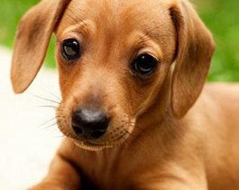 Dachshund Dog Name Custom 8 x 10 Canvas