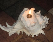 Wedding gift  - Candle seashell - Ramosus candle