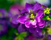 Vibrant purple flowers Nature and floral Photography