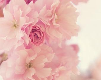 Fleurs de Cerisier Pink Cherry Blossoms Photograph Romantic Orchid Floral Botanical