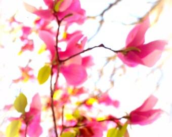 Pink Cherry Branch Photo