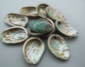 Pinto Red & Green Abalone Shells, Arts and Craft Supplies,