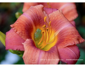Lily and Frog Photograph
