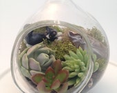 China Kitty Miniature Hand Blown Glass Succulent Terrarium