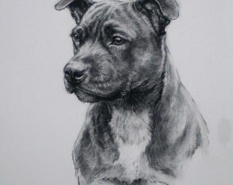 Staffordshire Bull Terrier dog dog gift dog lover gift art LE print from an original charcoal available unmounted or mounted ready to frame