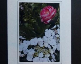 Grandma's Peony Garden Greeting/Note Card