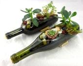 Wine Bottle Garden Succulent Complete Planter Kit - One Kit