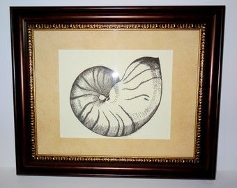 Pen and Ink Drawing  Nautilus Sea Shell Original Framed and Matted