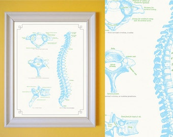 Gray's Anatomy Spine Vertebrae Sky Blue Green Poster Vintage Style Art Print for Chiropractor Doctor's Office 8x10 9x12 11x14 16x20 18x24