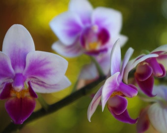 """Radiant Orchid - fine art photography - home decor - color of the year - pink purple - photo wall art - pink flowers  """"Graceful Orchid"""""""