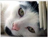 Cat Greeting Note Cards & Envelopes Set