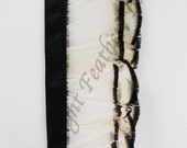 Feather Trim, Lady Amherst Pheasant, Natural White With Black Tips, per foot (bias tape color may vary)