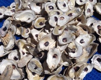 Cup side Oyster shells-- two dozen CUP side beautiful oyster shells from the beaches of Wellfleet and Cape Cod MA