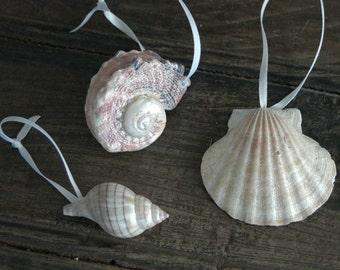 Shell Ornaments Beach Ornaments Coastal Christmas tree ornmanets -Set of 3