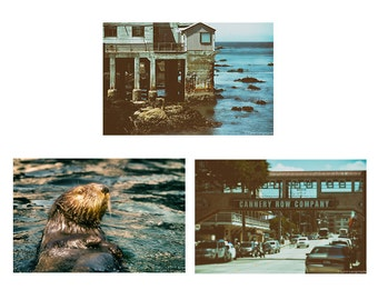 California Photography Set - Set of 3 photographs, California photos, summer photos, otter photos, Monterey, 3 prints, vintage prints, 11X14