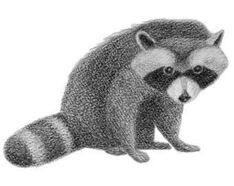 Young Raccoon - 4x6 print