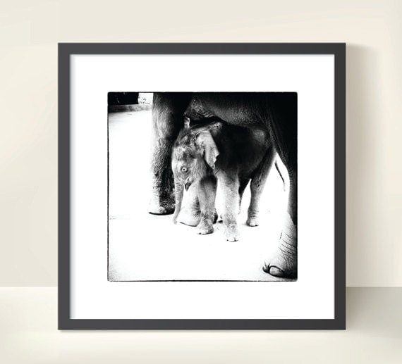Black and White Photo Art Print of an Elephant Baby in Thailand. Southeast Asia. Wall Home Decor. Monochrome Travel Photography.
