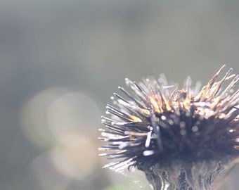 Photo Print, Teal, Gray, Natural Fall Flower Heads, Bokeh, Thistle