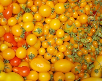 Cherry Tomato Seed Collection heirloom tomato seeds organic seeds kids gardening small tomatoes tomato plants gift for kids gift for grandpa