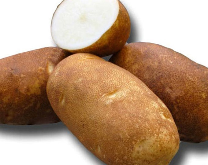 Russet Potato Seed   Rio Grande Seed Potatoes 2 Lbs. Certified Organic - Spring Shipping Non-GMO