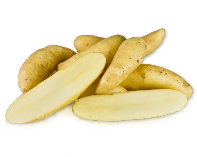 Austrian Crescent Fingerling Seed Potato Certified Organic 3 Pounds Gourmet - Spring Shipping Non-GMO
